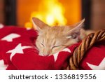 Stock photo orange kitten sleeping on red blanket in front of fireplace in security and comfort of a quiet 1336819556