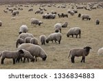 outdoor view of flock of sheep... | Shutterstock . vector #1336834883