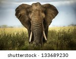 Background elephant