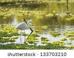 White Heron On A Lagoon.