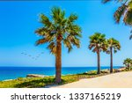 tall palm trees and well... | Shutterstock . vector #1337165219