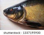 coloring black lyn fish on a... | Shutterstock . vector #1337195930