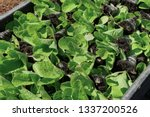 selective close up of green... | Shutterstock . vector #1337200526