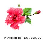 hibiscus flower in tropical... | Shutterstock . vector #1337380796