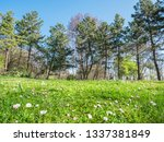 spring background at backyard... | Shutterstock . vector #1337381849