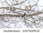 Virginia Winter Season And...