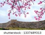 Nakijin Castle In Spring And...