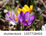 finally spring   detail view of ...   Shutterstock . vector #1337728403