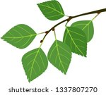 branch of birch with green...   Shutterstock .eps vector #1337807270