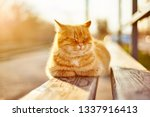 Stock photo street red cat basking in the sun 1337916413
