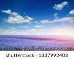colorful flowers over blue sky...   Shutterstock . vector #1337992403