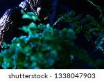 Stock photo bigfoot peeking through foliage on a black background with colored gels 1338047903