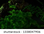 Stock photo bigfoot peeking through foliage on a black background with colored gels 1338047906