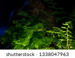 Stock photo bigfoot peeking through foliage on a black background with colored gels 1338047963