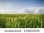 Young Green Barley Corns...