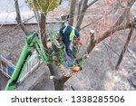 tree pruning and sawing by a... | Shutterstock . vector #1338285506
