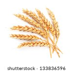 wheat isolated on white close up | Shutterstock . vector #133836596