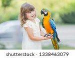 making photo of exotic animals. ... | Shutterstock . vector #1338463079