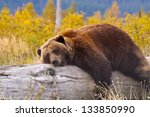 a bear in alaska laying down... | Shutterstock . vector #133850990