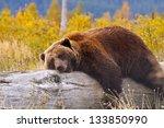 A Bear In Alaska Laying Down...