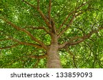 Stock photo under the shade of tall trees in tropical thailand 133859093