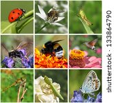 collage with macro photos of... | Shutterstock . vector #133864790