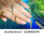 manicure fish spa beauty... | Shutterstock . vector #133868294
