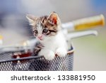 Stock photo cat kitten 133881950
