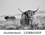 hardy scottish highland cows... | Shutterstock . vector #1338861839