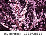 photography with flowers | Shutterstock . vector #1338938816