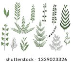 set of green plants. grass and... | Shutterstock .eps vector #1339023326