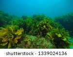 Flat Rocky Reef With Areas Of...