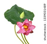 beautiful lotus flower bouquet... | Shutterstock . vector #1339031489