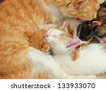 Stock photo cat mum bathing her kittens 133933070