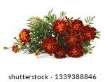 marigolds isolated on white   Shutterstock . vector #1339388846