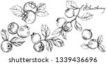blueberry black and white...   Shutterstock . vector #1339436696