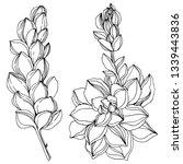 jungle botanical succulent... | Shutterstock . vector #1339443836