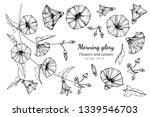 collection set of morning glory ... | Shutterstock .eps vector #1339546703