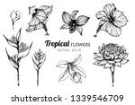 collection set of tropical... | Shutterstock .eps vector #1339546709