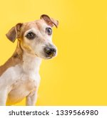Stock photo dog smart eyes looking amazing dog portrait on yellow background cute pet face 1339566980