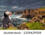 Puffin  Fratercula Arctica  At...