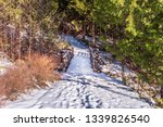 Fragment Of Winter Trail In...