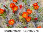 mojave mound cactus   Shutterstock . vector #133982978