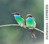 blue throated bee eater  bird ... | Shutterstock . vector #133988306