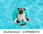 Cute Little Pug Puppy Floating...