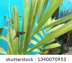 A Black Butterfly Perch On The...
