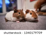 a portrait shot of pair red and ... | Shutterstock . vector #1340179709