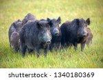 Numerous herd of wild animals...