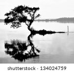 Tree Captured In The Water