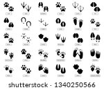 Animals Footprints. Animal Fee...
